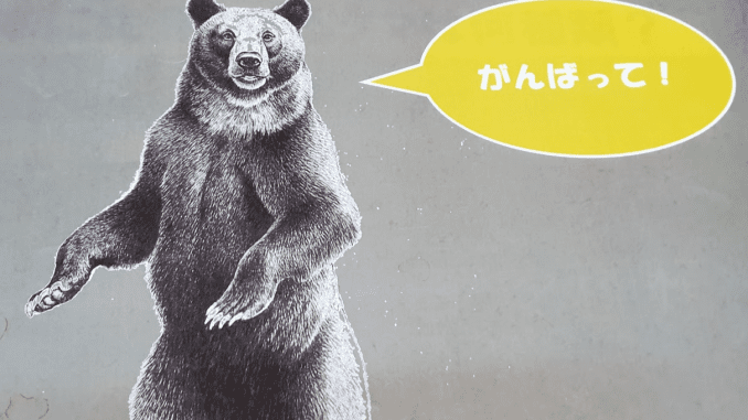 brown bear grizzly quiz - shiretoko japan - japans lost decade stock market crashes